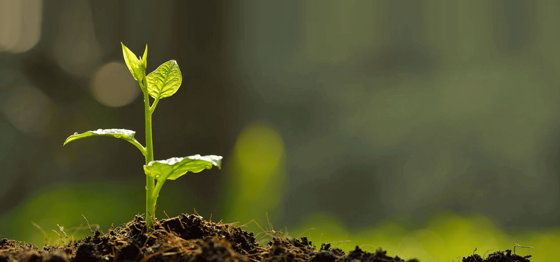 Indus Organic